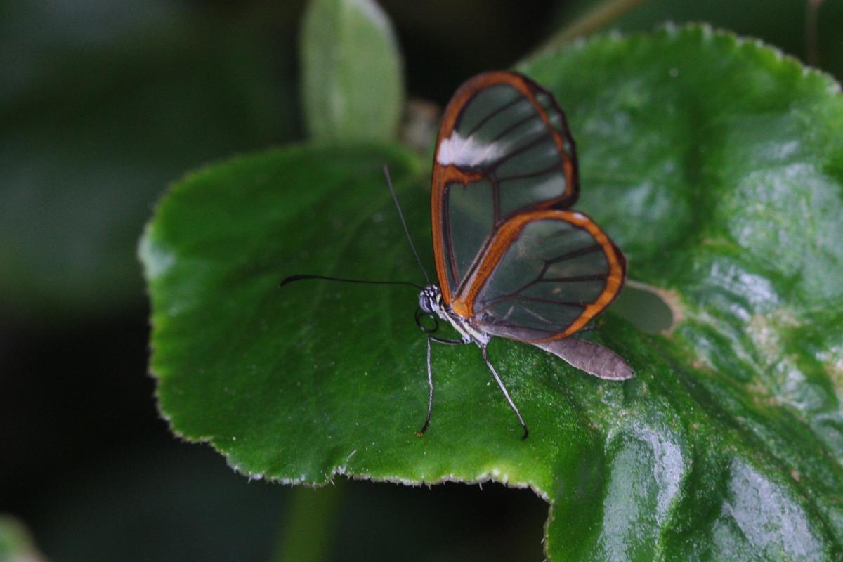 Torben Astrup insekt